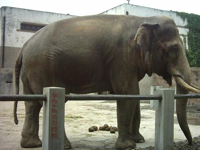动物园的大象