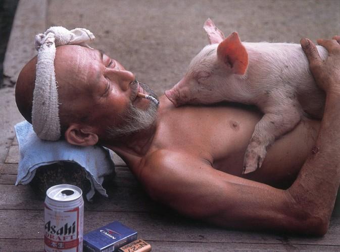 与猪共生!实拍有爱的大爷