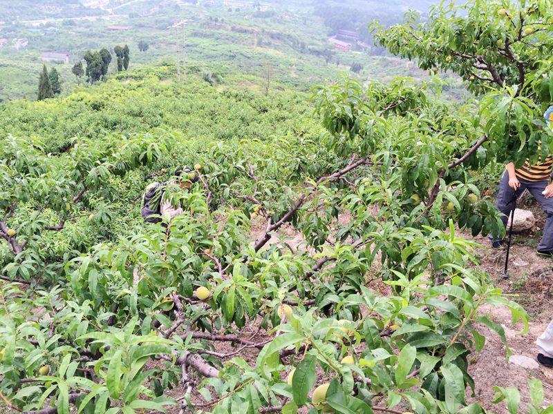 桃林动漫风景图片