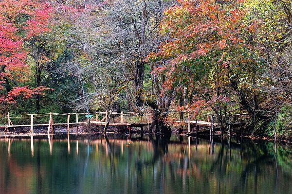 [原创]喇叭河之秋---摄与雅安天全县
