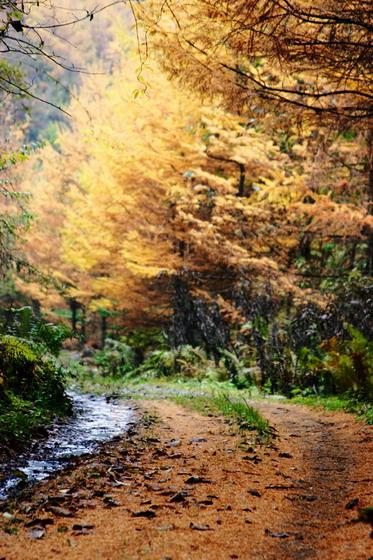 浓浓的节日气氛,欢乐的篝火晚会(西窝羌寨土地岭森林公园中秋行9月10