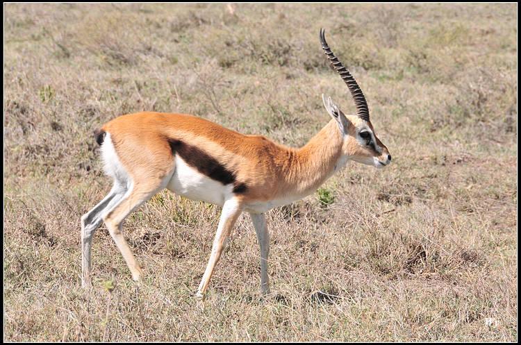 东非—野生动物的天堂
