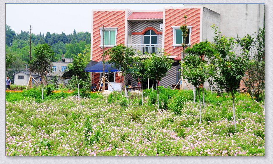 绵阳杨家镇百草园刚开始打造